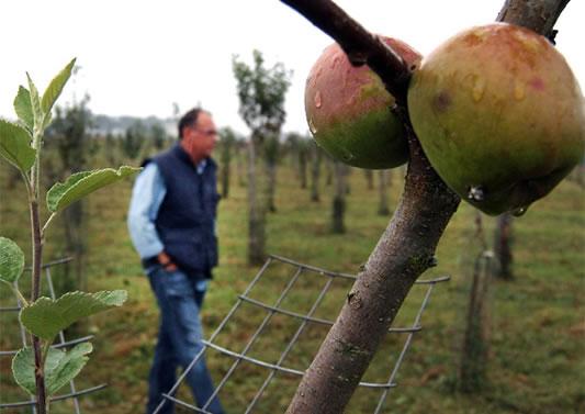 Ruta de la manzana ecológica y de la sidra